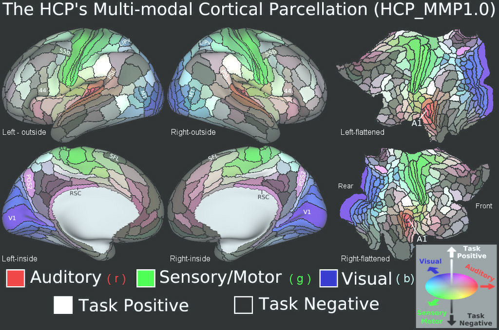 HCP Brain Maps, Examples