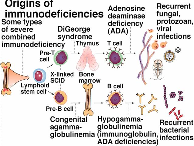 the nature and origin of the acquired immunodeficiency syndrome Here we discuss evidence about the origin of hiv and how the simian immunodeficiency update on acquired immune deficiency syndrome (aids.