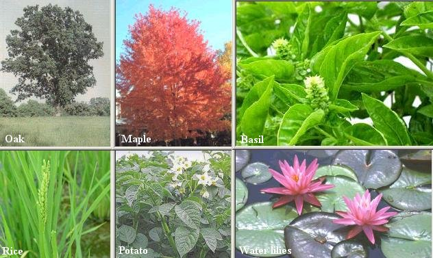 http://universe-review.ca/I10-22a-angiosperms.jpg 10 Examples Of Monocot Plants