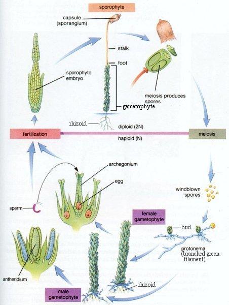 Anatomy of Plants