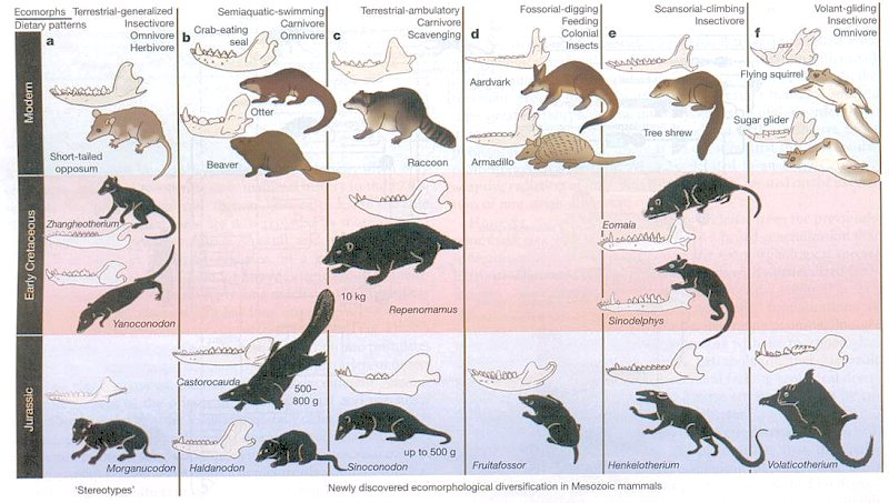 Early Mammal Diversification