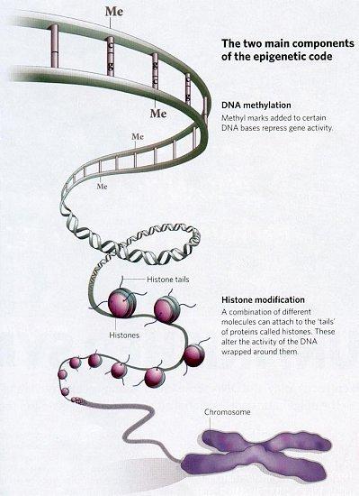 Genetik = These