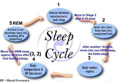 Stages of Sleep and Sleep Cycles