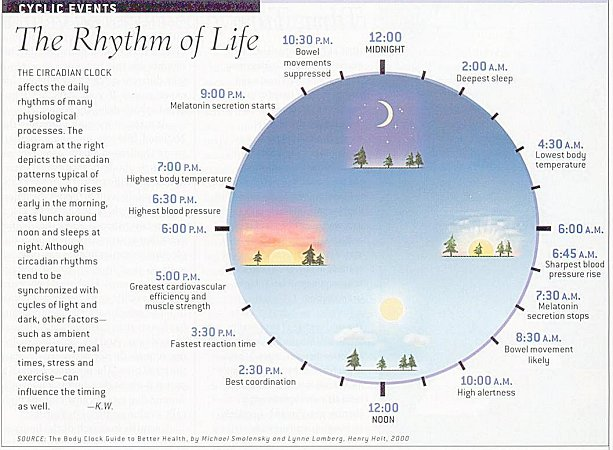 Image result for circadian clock
