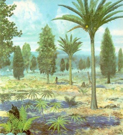 Jurassic plants - photo#20