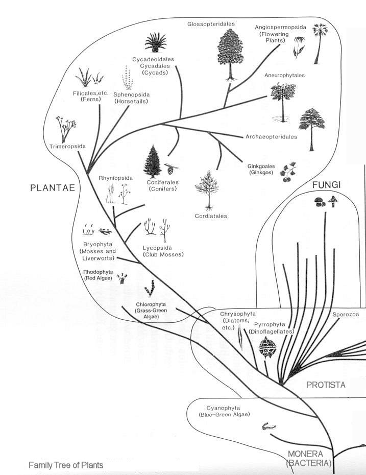Evolution of micro organisms and plants for Fish in a tree summary