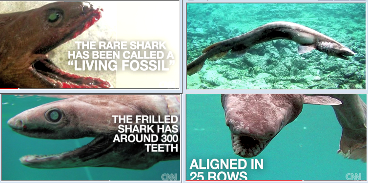 Anatomy of shark