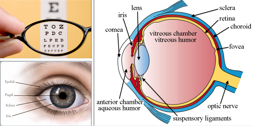 how to put contacts in with sensitive eyes
