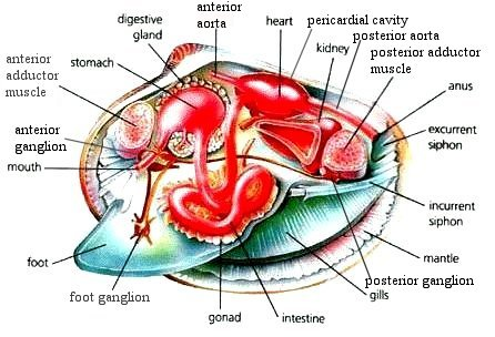 Anatomy of Animals