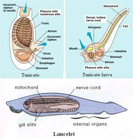 Whale respiratory system diagram easy to read wiring diagrams anatomy of animals rh universe review ca how do whales breathe dolphin respiratory system ccuart Choice Image