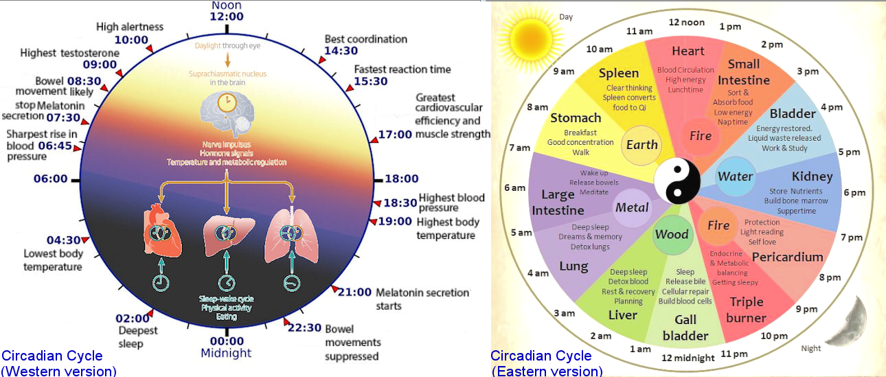 Circadian Cycle, East and West