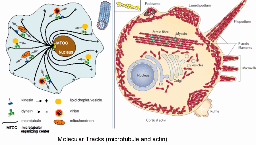 Moleculartracks