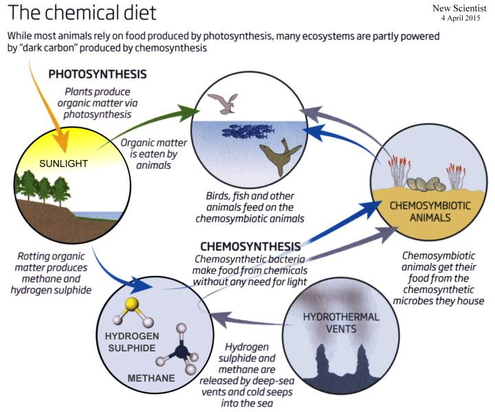 chemosynthesis organisms found