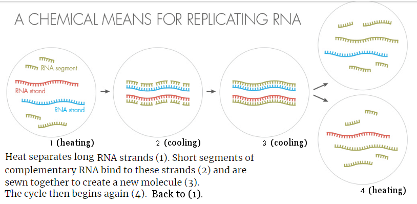 RNA Replication