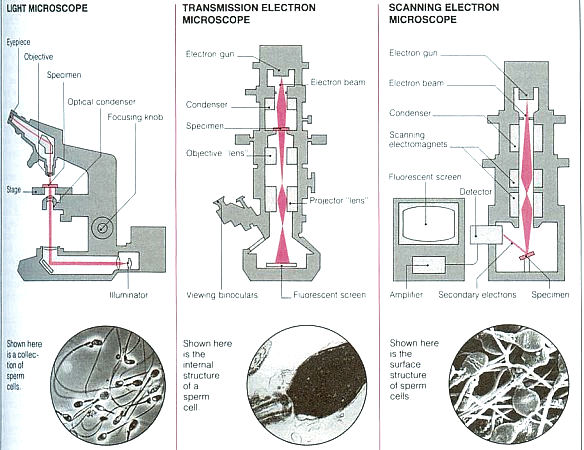 Types of Microscope