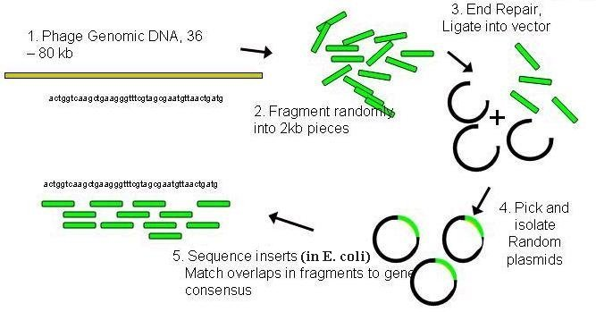 Large Scale Sequencing