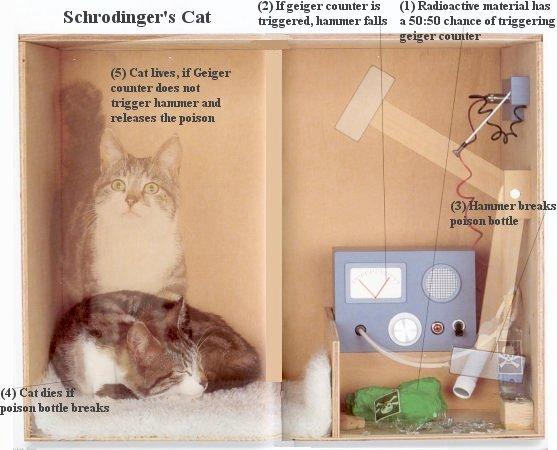 I12-21-cat.jpg